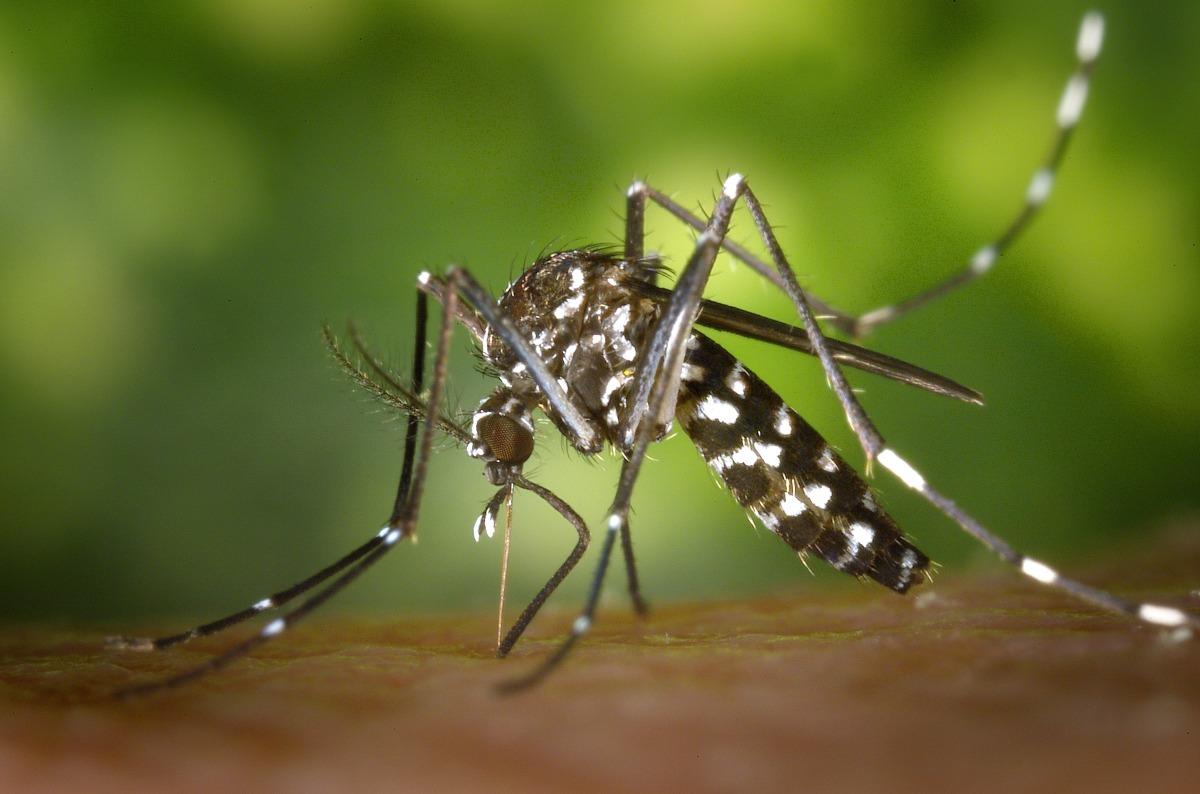 Mosquito testing